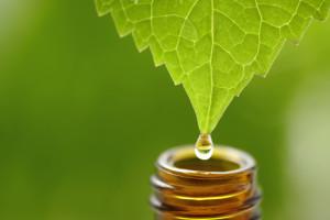 leaf oil